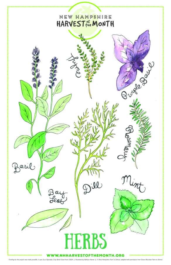 hom_10_june_herbs